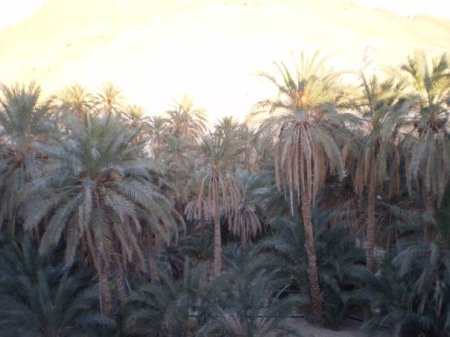 Chebika palmiers